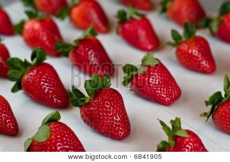 Strawberries In A Row
