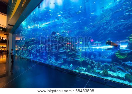 DUBAI, UAE - 1 APRIL 2014: Huge Oceanarium inside Dubai Mall. It is the largest indoor aquarium in the world at a length of 50 meters long and 10 million litres of water.