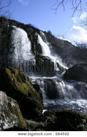 Fintry Loup