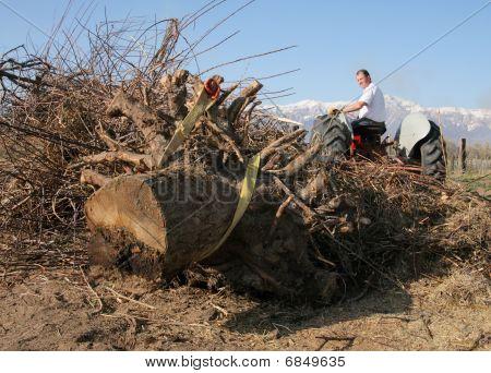 farmer and stump