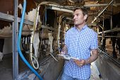 Farmer Inspecting Cattle During Milking With Clipboard poster