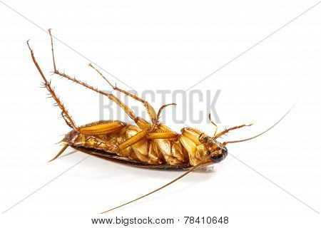 Cockroach Turn Face Up
