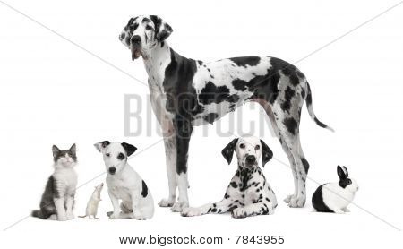 Group Portrait Of Black And White Animals In Front Of White Background