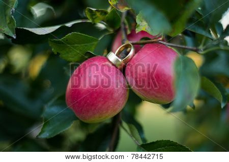 Rings On Red Apple