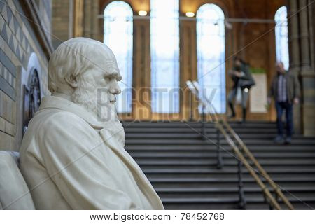 LONDON, UK - DECEMBER 11: Profile of Charles Darwin statue at the Natural History Museum. December 11, 2014 in London.