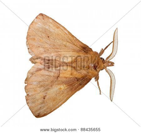macro photo of brown butterfly isolated on white background