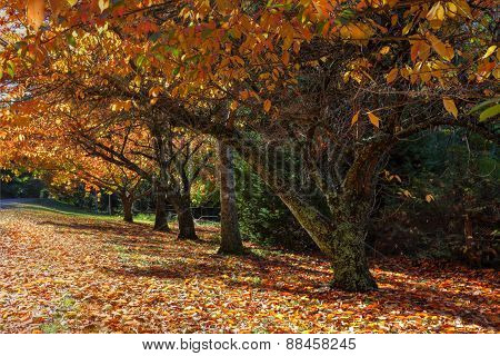 Autumn Colours In The Trees
