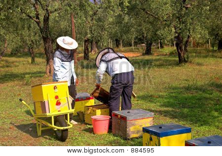 Bee Boxes And  Bee Keepers 3