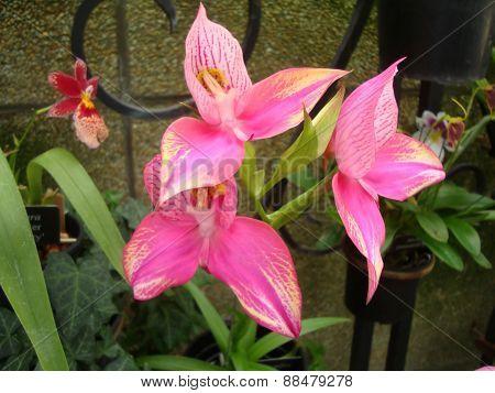 Pretty Pinkish Flowers