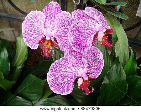 Pretty Purple, white, red Flower