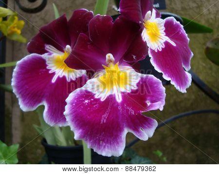 Pretty Purplish & Yellow Flowers