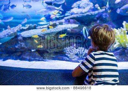 Young man sitting in front of a fish-tank at the aquarium