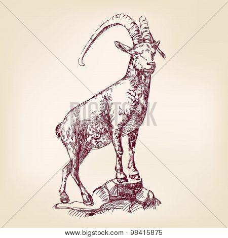 goat hand drawn vector llustration