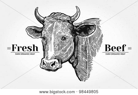 Cows head drawn in a graphic style.