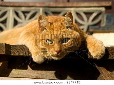 Ginger Cat Staring At Me