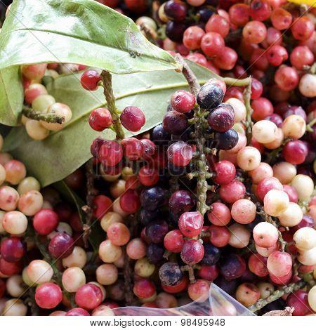 Antidesma Thwaitesianum Mull.arg., Ma-mao (thai Name) Isan Region Of Thailand Fruit With Medicinal P