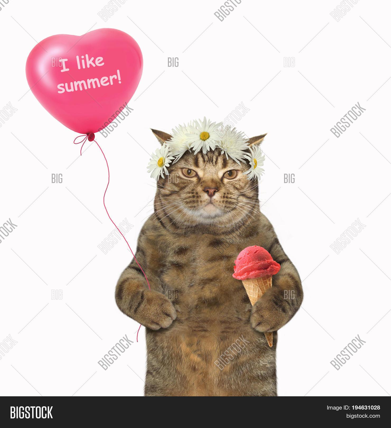 Cat Eats Ice Cream Image Photo Free Trial Bigstock