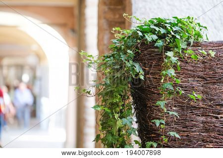 Flowers decorate colonnade in Padova, Italy