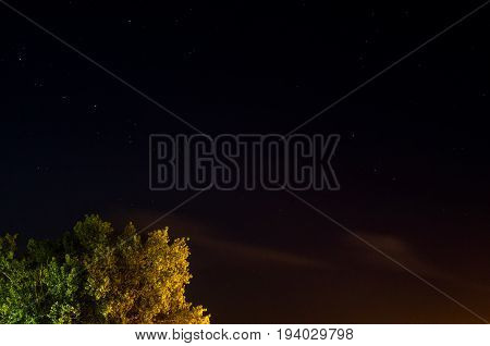 Tree under nighttime starlit sky with ample copy space