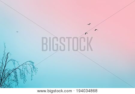 Nature background with lots of space - remote silhouettes of birds tree branches and a small plane in a pink autumn or winter sky.