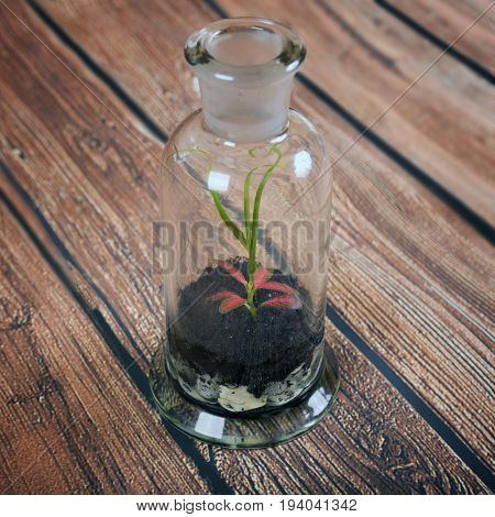 Terrarium bottle decorated with small plants on wooden background