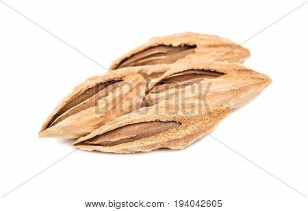 Uzbek Almonds In Shell