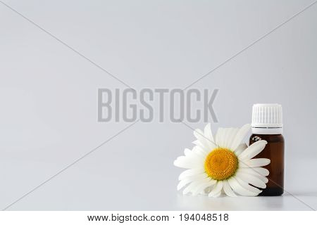 Chamomile Tincture Essential Oil In Cosmetic Bottle. Fresh Chamomile Flowers