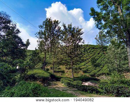 Munnar Landscape