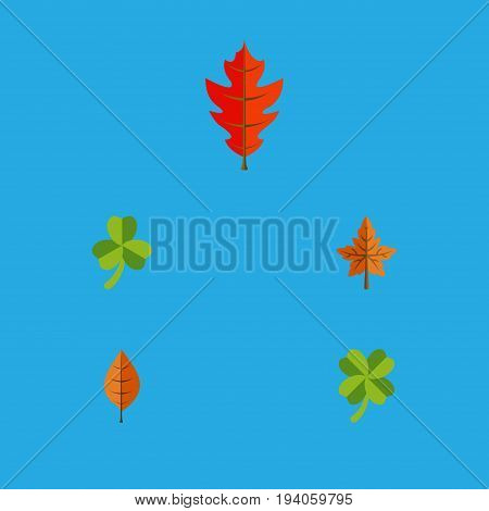 Flat Icon Maple Set Of Frond, Foliage, Alder And Other Vector Objects. Also Includes Hickory, Frond, Foliage Elements.