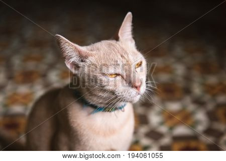 Close focus on face of angry cat dimming eyes and looking to the light