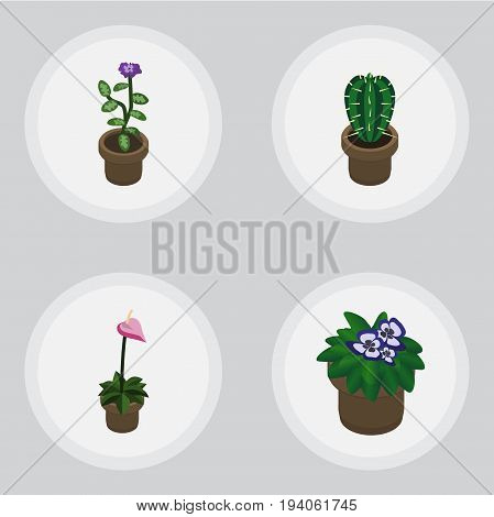 Isometric Houseplant Set Of Flowerpot, Grower, Flower And Other Vector Objects. Also Includes Flower, Cactus, Flowerpot Elements.