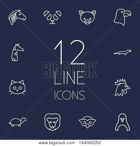 Set Of 12 Zoology Outline Icons Set.Collection Of Feline Bear, Eagle, Cat And Other Elements.