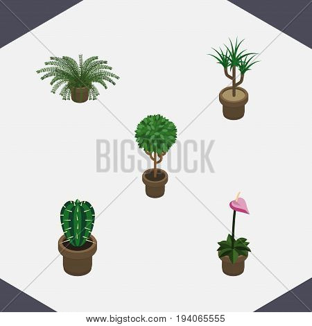 Isometric Houseplant Set Of Tree, Peyote, Grower And Other Vector Objects. Also Includes Pot, Peyote, Botany Elements.