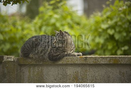 Cat lying on top of a wall surrounded by nature looking at it very calmly.
