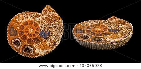 an ammonite fossil on a black background