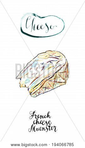 Watercolor piece of French cheese Muenster hand drawn illustration