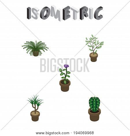 Isometric Houseplant Set Of Houseplant, Peyote, Flower And Other Vector Objects. Also Includes Pot, Fern, Flower Elements.