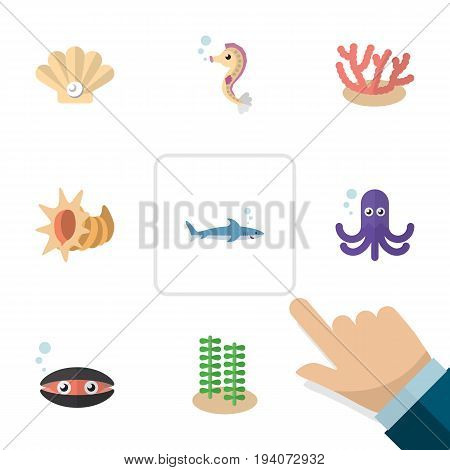 Flat Icon Marine Set Of Scallop, Shark, Tentacle And Other Vector Objects. Also Includes Tentacle, Gray, Octopus Elements.