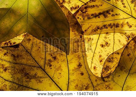autumn leaves in the detail close up