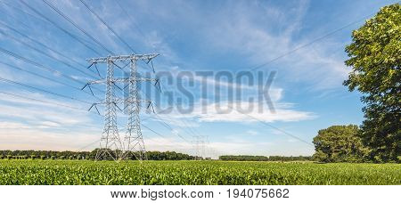 High voltage pylons and cables in an Dutch agricultural landscape with silage maize cultivation on a sunny day in the summer season.