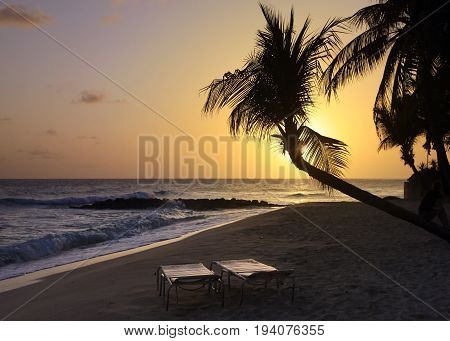 View of nice tropical beach with palm on sunset. Barbados