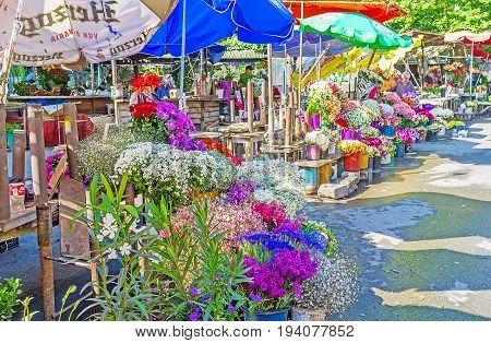 The Flower Market In Mtatsminda District Of Tbilisi