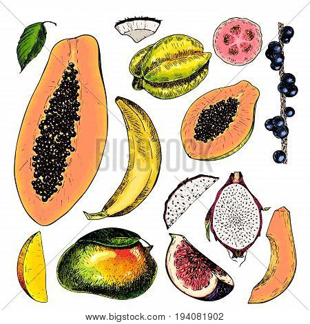 Vector hand drawn exotic fruits. Engraved smoothie bowl ingredients. Colored icon set. Tropical sweet food. Carambola fig mango pitaya banana acai guava coconut exotic restaurant food party