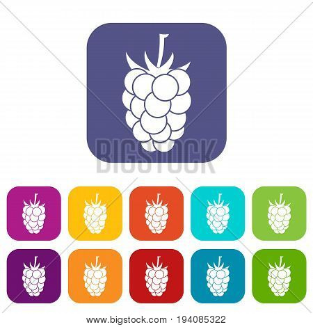 Blackberry fruit icons set vector illustration in flat style In colors red, blue, green and other