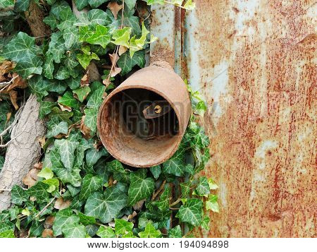 Old padlock with rusty round lock box protection on a neglected metallic door overgrown with ivy
