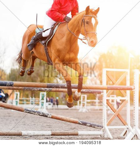 Young rider performing jump on sorrel horse over a hurdle on show jumping. Equestrian sport background with copy space