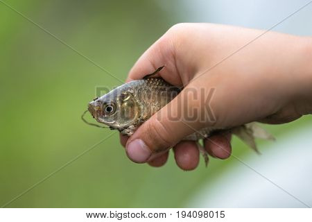Caught A Small Fish In Children's Palms.