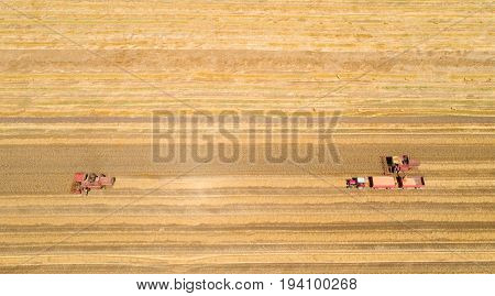 Combine Harvesters Working In Golden Wheat Field