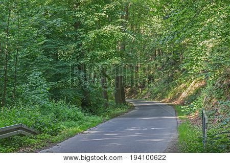 The photo shows a narrow, asphalt, provincial, winding road. It leads through deciduous forest. It's summer. There are green leaves on the trees. It is sunny day you can see stains piercing through the crowns of sun trees. On one side of the road there is