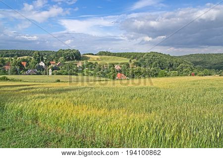 The photo shows a corrugated area. On the hills there are farmlands where cereals are grown. Growing corn has green ears. In the valley there is a village. Buildings are hidden among the trees, only roofed tiles visible. It is sunny day.